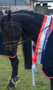V-Neck Equestrian Tri-Sash
