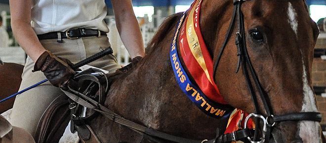 equestrian-ribbons